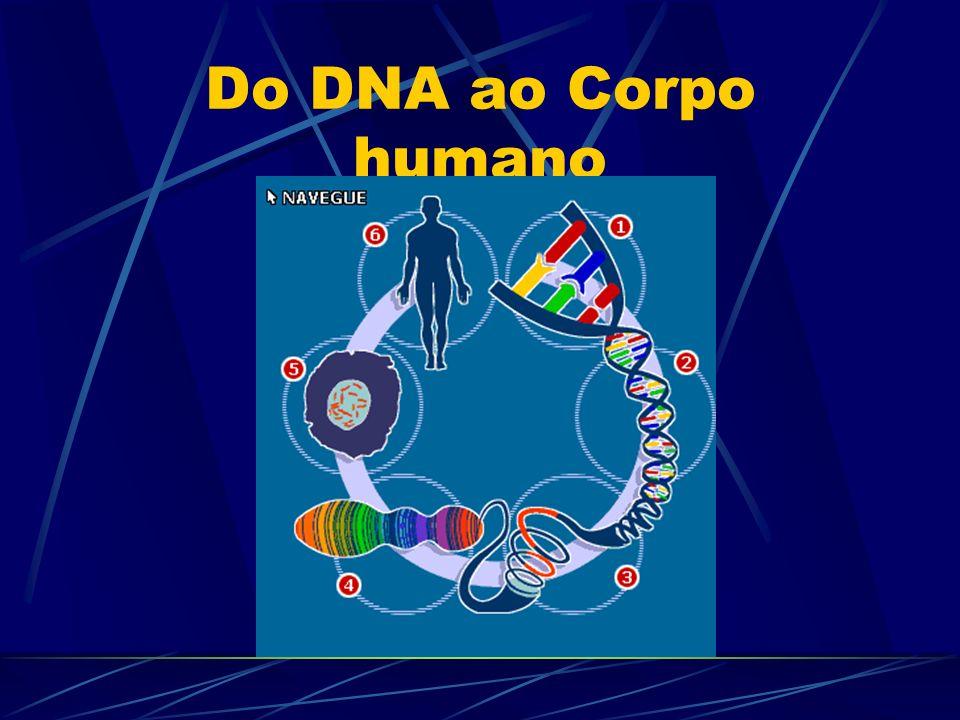Do DNA ao Corpo humano