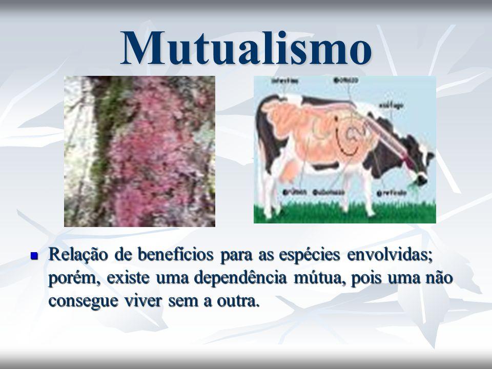 Mutualismo Relação de benefícios para as espécies envolvidas; porém, existe uma dependência mútua, pois uma não consegue viver sem a outra. Relação de