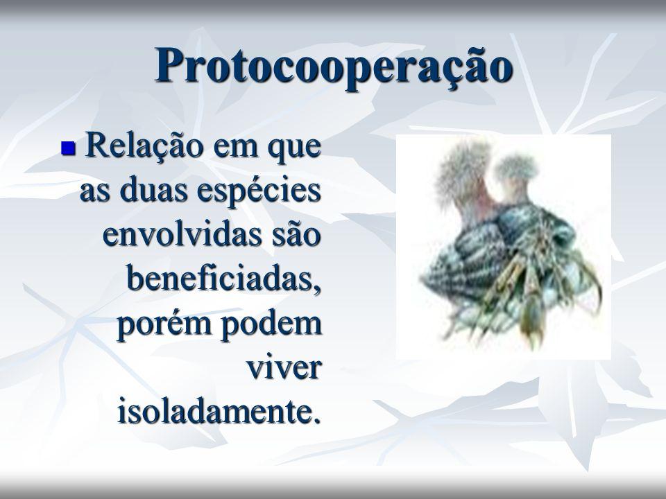 Protocooperação Relação em que as duas espécies envolvidas são beneficiadas, porém podem viver isoladamente. Relação em que as duas espécies envolvida