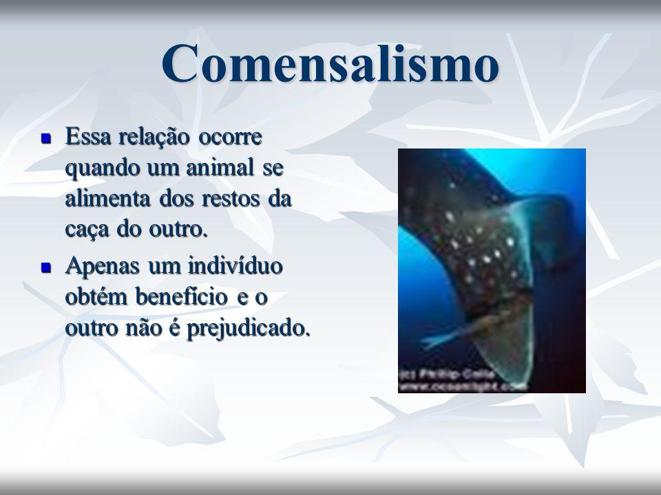 Comensalismo Essa relação ocorre quando um animal se alimenta dos restos da caça do outro. Essa relação ocorre quando um animal se alimenta dos restos