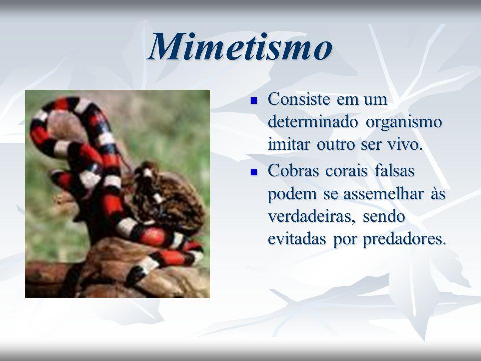 Mimetismo Consiste em um determinado organismo imitar outro ser vivo. Consiste em um determinado organismo imitar outro ser vivo. Cobras corais falsas