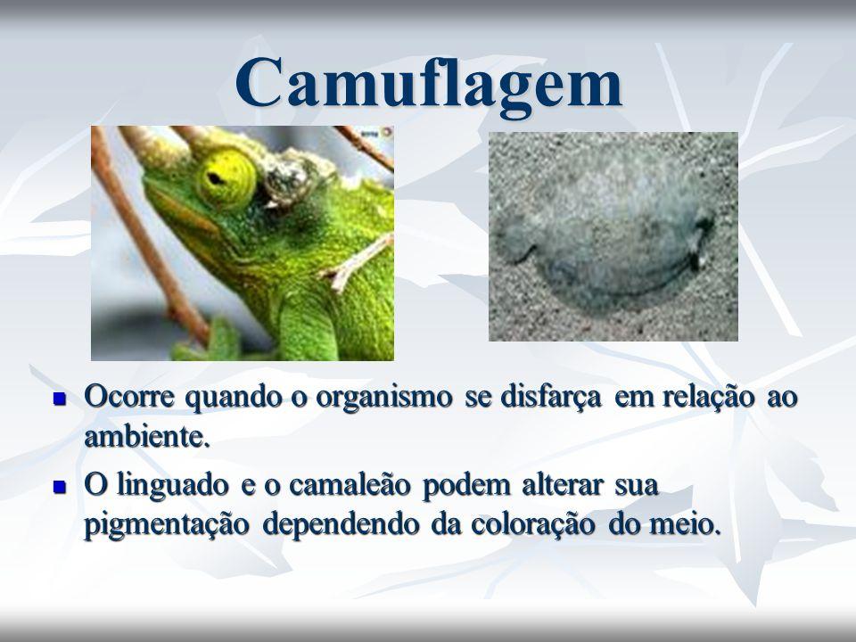 Camuflagem Ocorre quando o organismo se disfarça em relação ao ambiente. Ocorre quando o organismo se disfarça em relação ao ambiente. O linguado e o