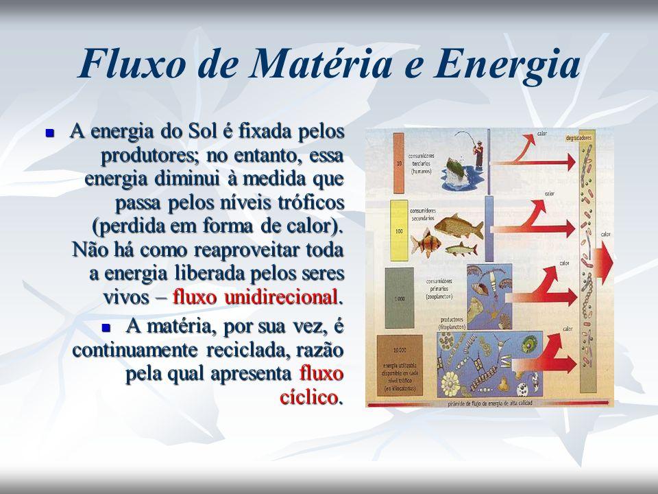 Fluxo de Matéria e Energia A energia do Sol é fixada pelos produtores; no entanto, essa energia diminui à medida que passa pelos níveis tróficos (perd