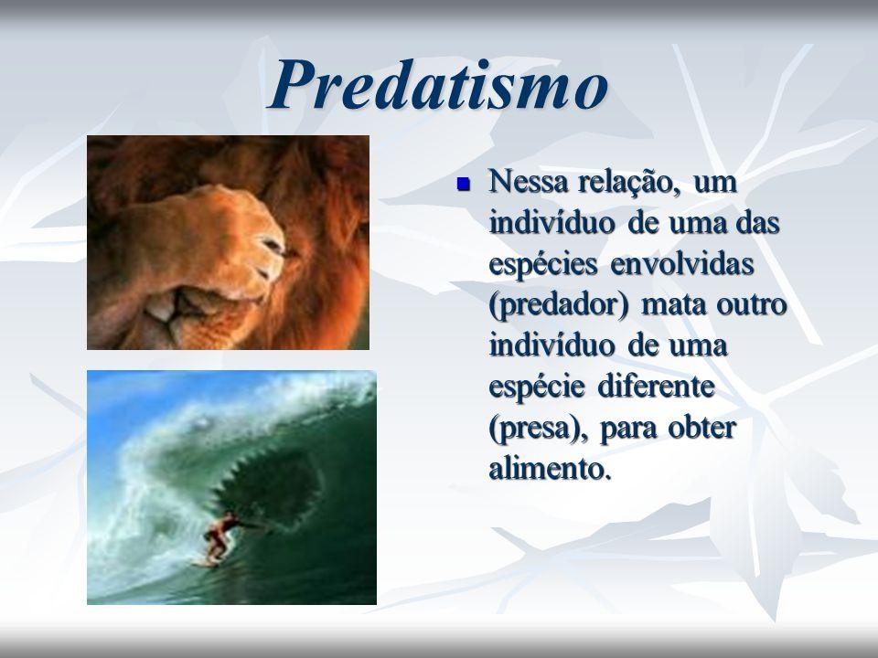 Predatismo Nessa relação, um indivíduo de uma das espécies envolvidas (predador) mata outro indivíduo de uma espécie diferente (presa), para obter ali