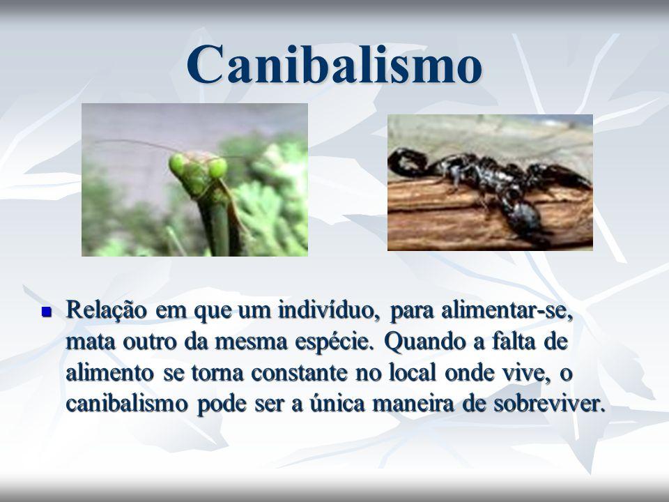 Canibalismo Relação em que um indivíduo, para alimentar-se, mata outro da mesma espécie. Quando a falta de alimento se torna constante no local onde v