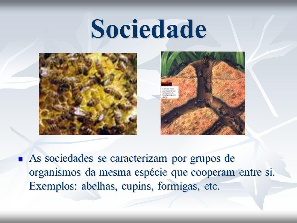 Sociedade As sociedades se caracterizam por grupos de organismos da mesma espécie que cooperam entre si. Exemplos: abelhas, cupins, formigas, etc. As
