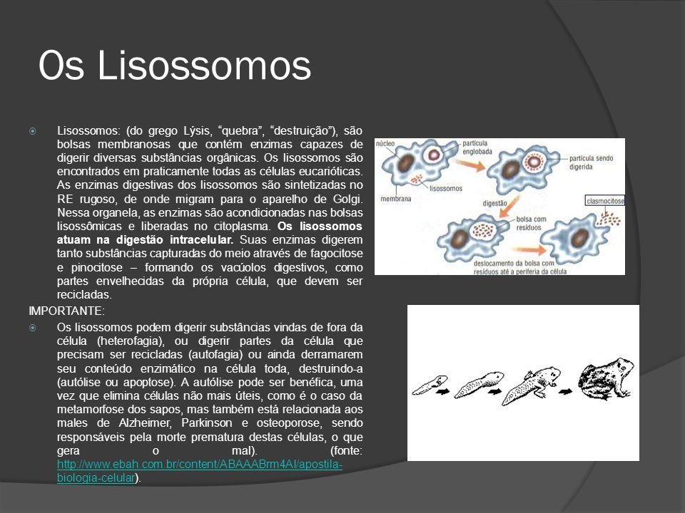 Os Peroxissomos Bolsas membranosas que contêm enzimas digestivas, porém, diferentes das presentes nos lisossomos.