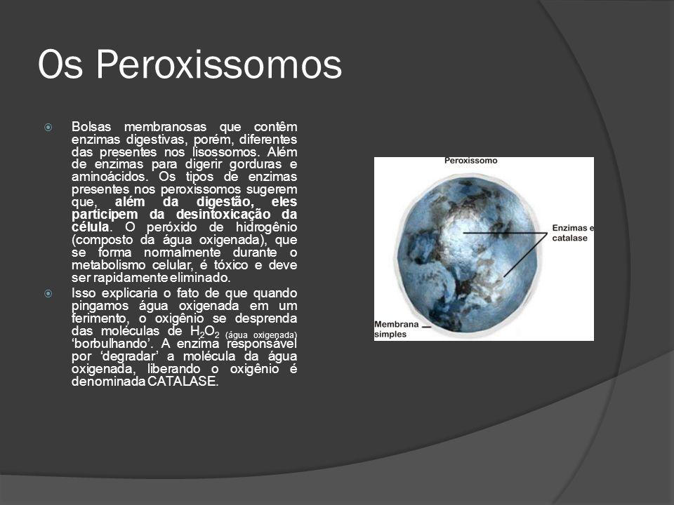 Os Peroxissomos Bolsas membranosas que contêm enzimas digestivas, porém, diferentes das presentes nos lisossomos. Além de enzimas para digerir gordura