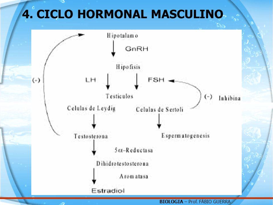 BIOLOGIA – Prof. FÁBIO GUERRA 4. CICLO HORMONAL MASCULINO