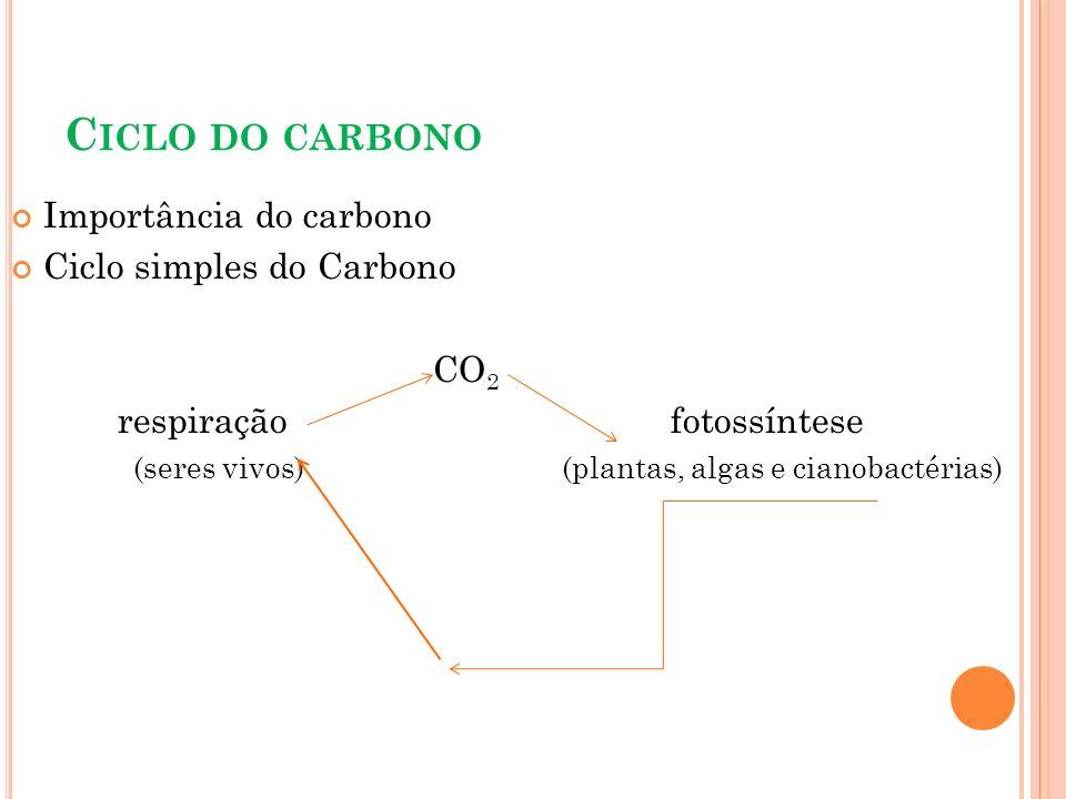 C ICLO DO CARBONO Importância do carbono Ciclo simples do Carbono CO 2 respiração fotossíntese (seres vivos) (plantas, algas e cianobactérias)