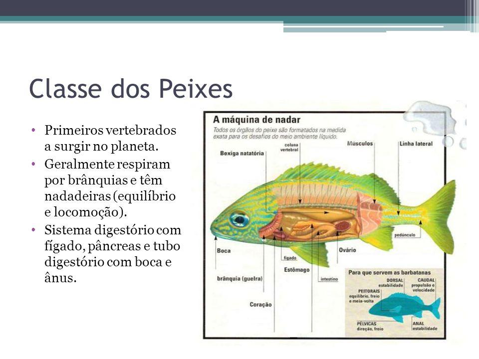 Muitas espécies se alimentam filtrando o plâncton e outras são herbívoras ou predadores ou parasitas.
