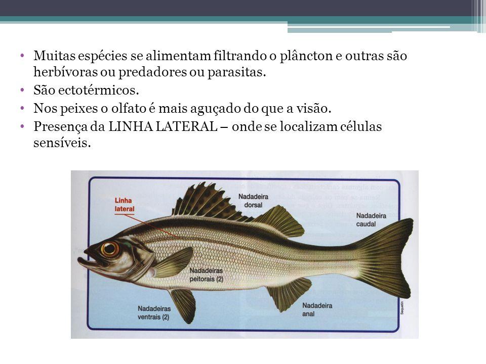 Muitas espécies se alimentam filtrando o plâncton e outras são herbívoras ou predadores ou parasitas. São ectotérmicos. Nos peixes o olfato é mais agu