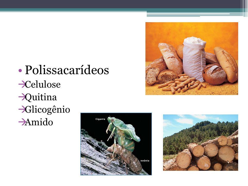 Polissacarídeos Celulose Quitina Glicogênio Amido
