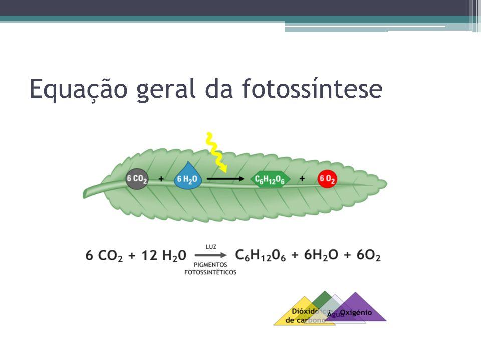 Carboidrato como fonte de energia