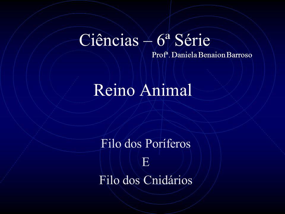 Reino Animal Filo dos Poríferos E Filo dos Cnidários Ciências – 6ª Série Profª.
