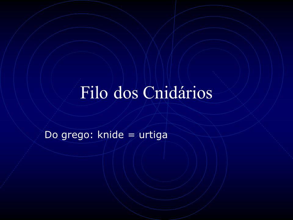 Filo dos Cnidários Do grego: knide = urtiga