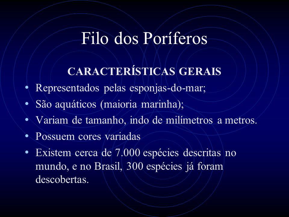 Filo dos Poríferos CARACTERÍSTICAS GERAIS Representados pelas esponjas-do-mar; São aquáticos (maioria marinha); Variam de tamanho, indo de milímetros a metros.