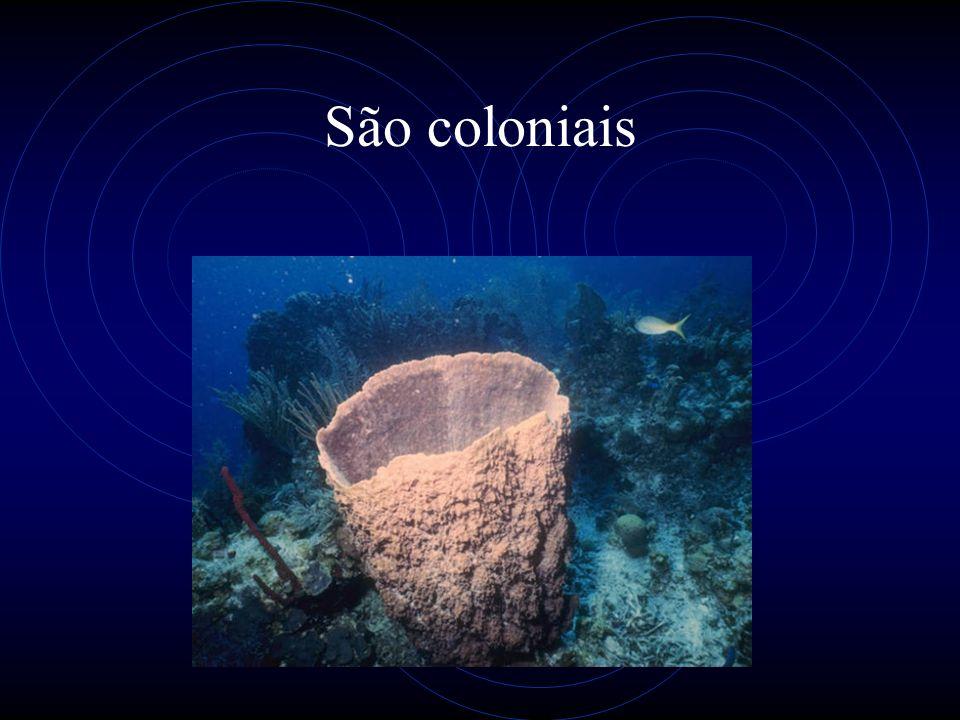 Características gerais Representado pelas caravelas, águas vivas, hydras, corais e anêmonas do mar.