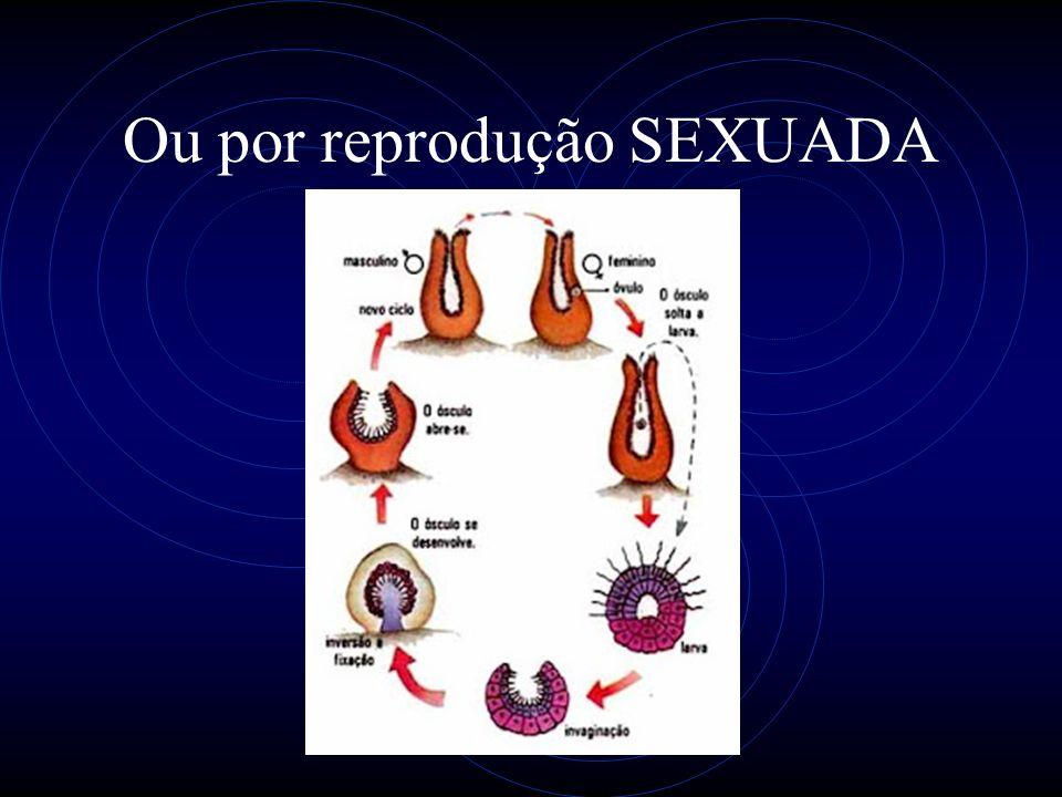 Ou por reprodução SEXUADA