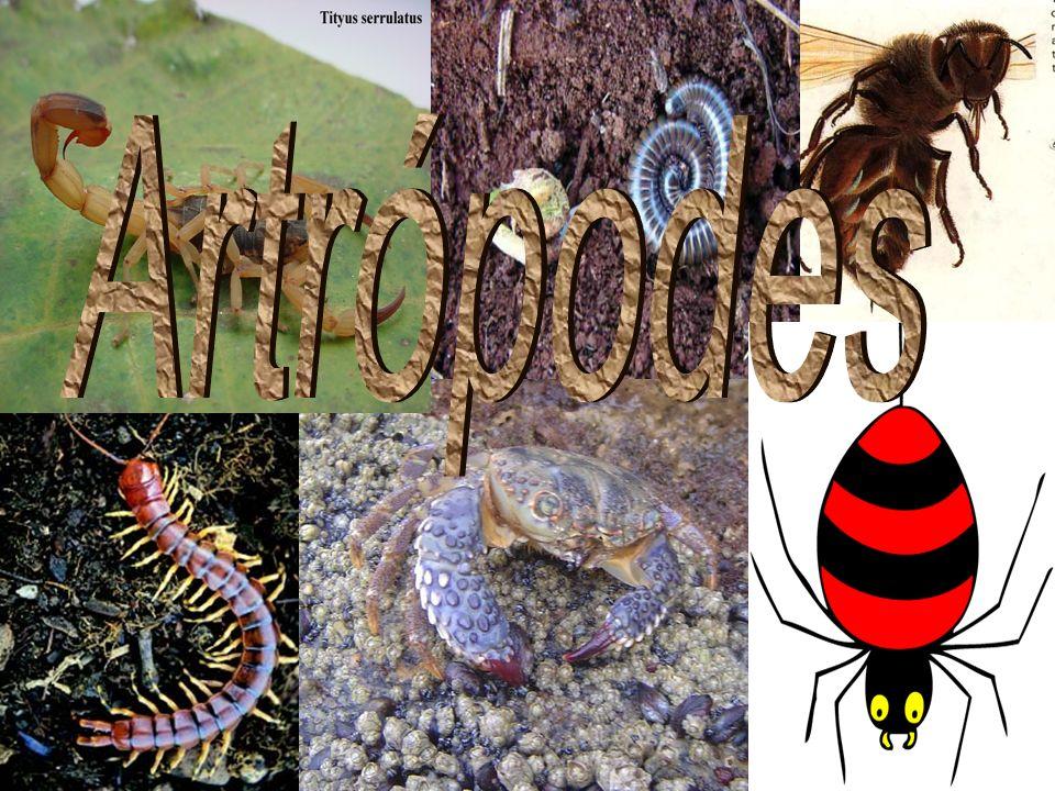 Os Artrópodes (do grego artros: articulação e podos: pés, patas, apêndices) são animais invertebrados caracterizados por possuírem patas formadas por peças móveis e articuladas entre si.