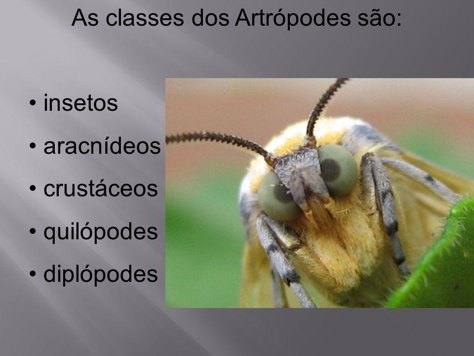 As classes dos Artrópodes são: insetos aracnídeos crustáceos quilópodes diplópodes
