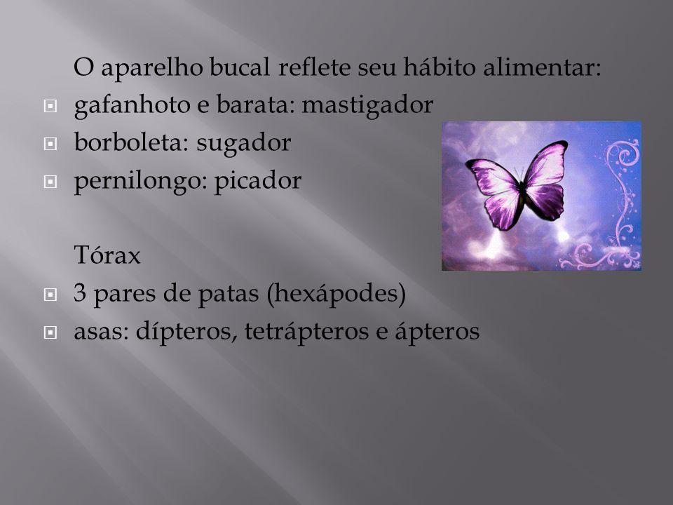 O aparelho bucal reflete seu hábito alimentar: gafanhoto e barata: mastigador borboleta: sugador pernilongo: picador Tórax 3 pares de patas (hexápodes