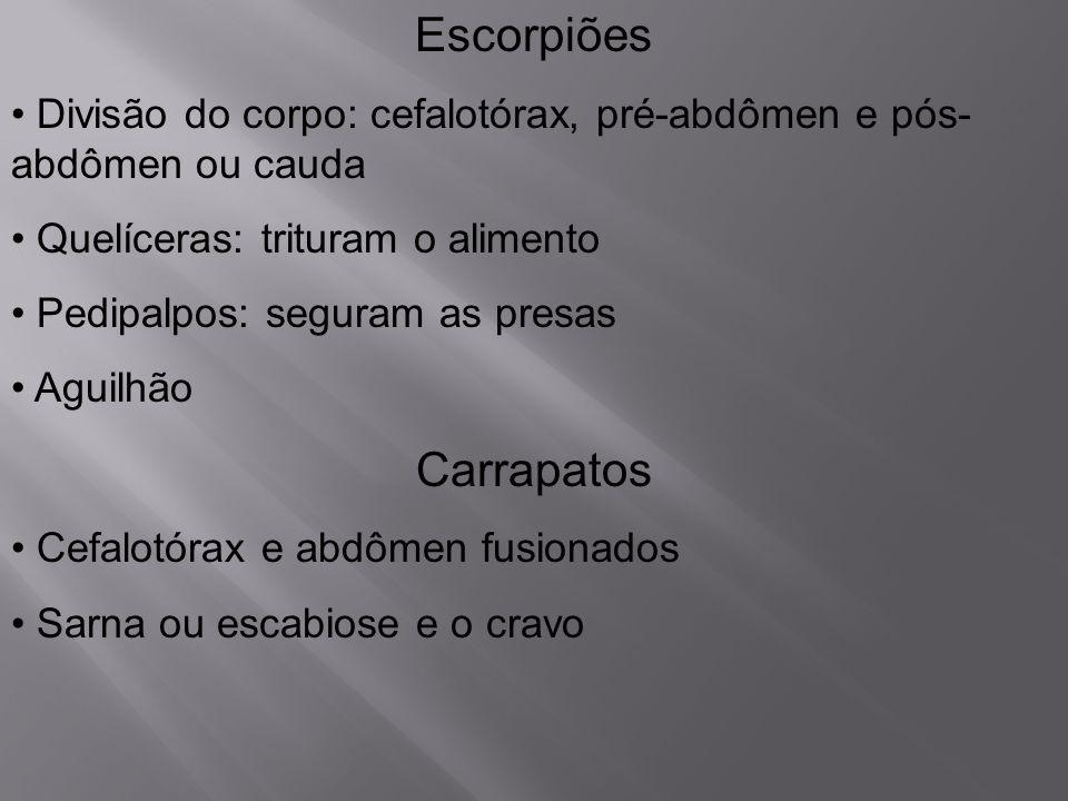 Escorpiões Divisão do corpo: cefalotórax, pré-abdômen e pós- abdômen ou cauda Quelíceras: trituram o alimento Pedipalpos: seguram as presas Aguilhão C