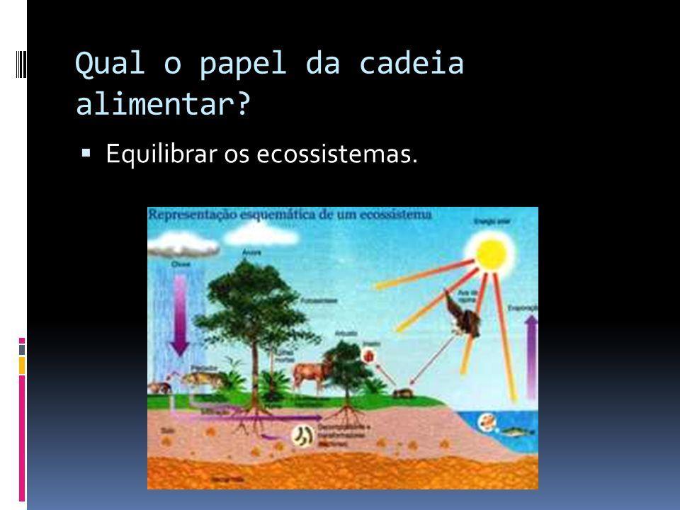 Qual o papel da cadeia alimentar? Equilibrar os ecossistemas.