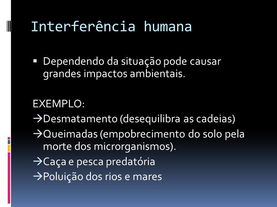Interferência humana Dependendo da situação pode causar grandes impactos ambientais. EXEMPLO: Desmatamento (desequilibra as cadeias) Queimadas (empobr