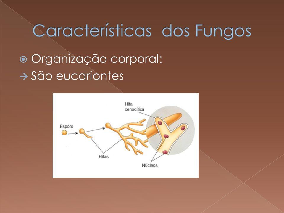 Organização corporal: São eucariontes