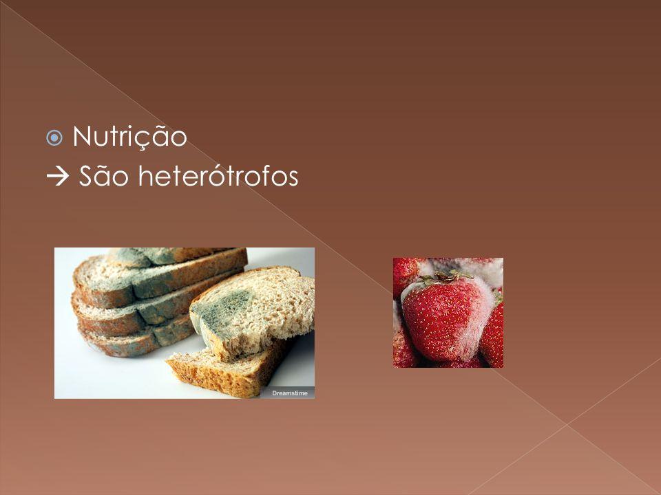 Nutrição São heterótrofos