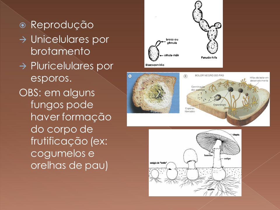Reprodução Unicelulares por brotamento Pluricelulares por esporos. OBS: em alguns fungos pode haver formação do corpo de frutificação (ex: cogumelos e