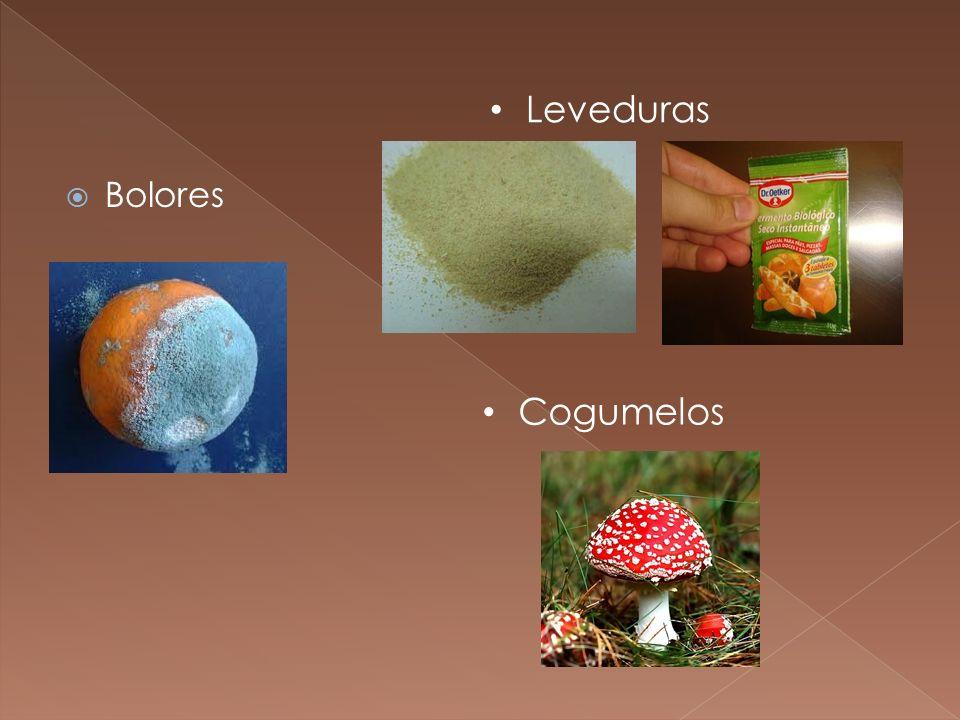 Bolores Cogumelos Leveduras