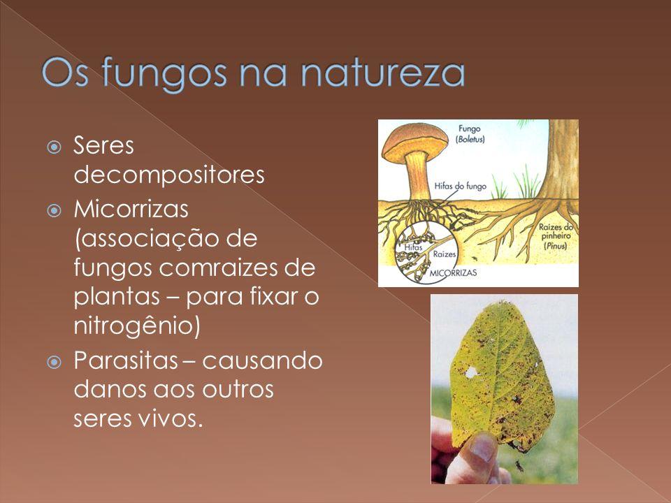 Seres decompositores Micorrizas (associação de fungos comraizes de plantas – para fixar o nitrogênio) Parasitas – causando danos aos outros seres vivo