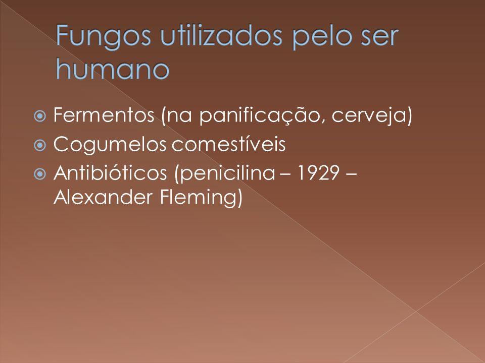 Fermentos (na panificação, cerveja) Cogumelos comestíveis Antibióticos (penicilina – 1929 – Alexander Fleming)