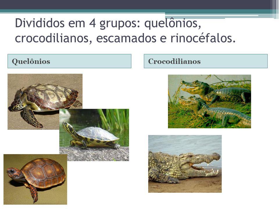 Divididos em 4 grupos: quelônios, crocodilianos, escamados e rinocéfalos. QuelôniosCrocodilianos
