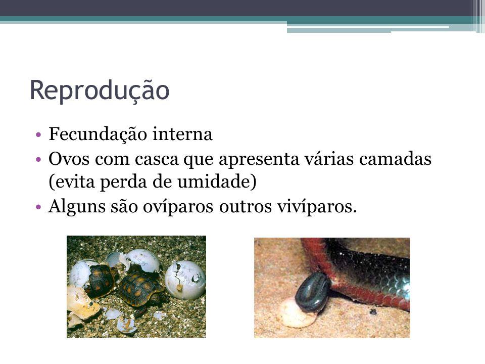 Reprodução Fecundação interna Ovos com casca que apresenta várias camadas (evita perda de umidade) Alguns são ovíparos outros vivíparos.