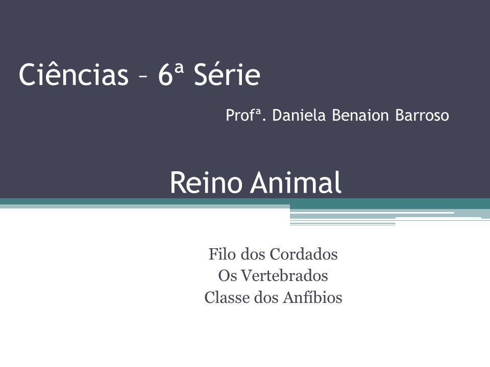 Ciências – 6ª Série Profª. Daniela Benaion Barroso Filo dos Cordados Os Vertebrados Classe dos Anfíbios Reino Animal.