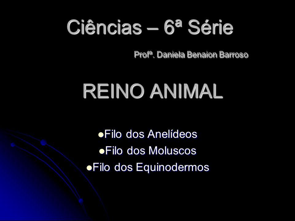 Ciências – 6ª Série Profª. Daniela Benaion Barroso Filo dos Anelídeos Filo dos Anelídeos Filo dos Moluscos Filo dos Moluscos Filo dos Equinodermos Fil