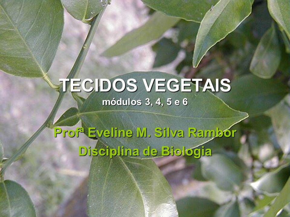 TECIDOS VEGETAIS módulos 3, 4, 5 e 6 Profª Eveline M. Silva Rambor Disciplina de Biologia