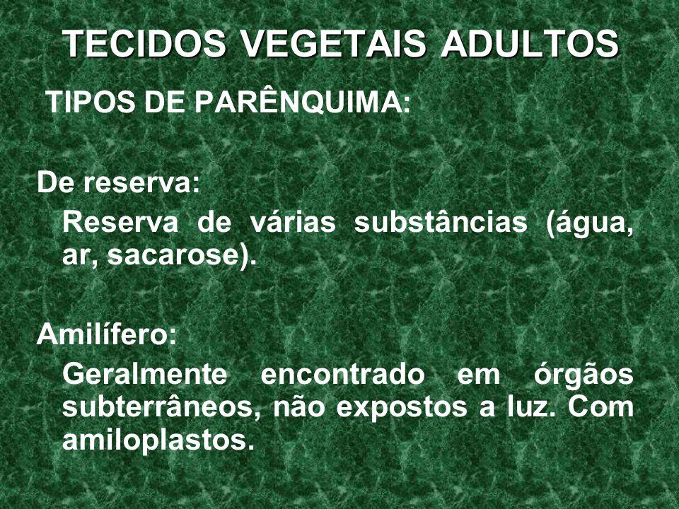 TECIDOS VEGETAIS ADULTOS TIPOS DE PARÊNQUIMA: De reserva: Reserva de várias substâncias (água, ar, sacarose).
