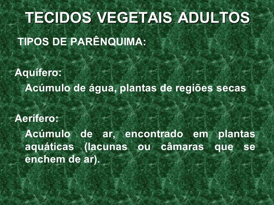 TECIDOS VEGETAIS ADULTOS TIPOS DE PARÊNQUIMA: Aquífero: Acúmulo de água, plantas de regiões secas Aerífero: Acúmulo de ar, encontrado em plantas aquáticas (lacunas ou câmaras que se enchem de ar).