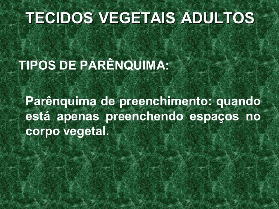 TECIDOS VEGETAIS ADULTOS TIPOS DE PARÊNQUIMA: Parênquima de preenchimento: quando está apenas preenchendo espaços no corpo vegetal.