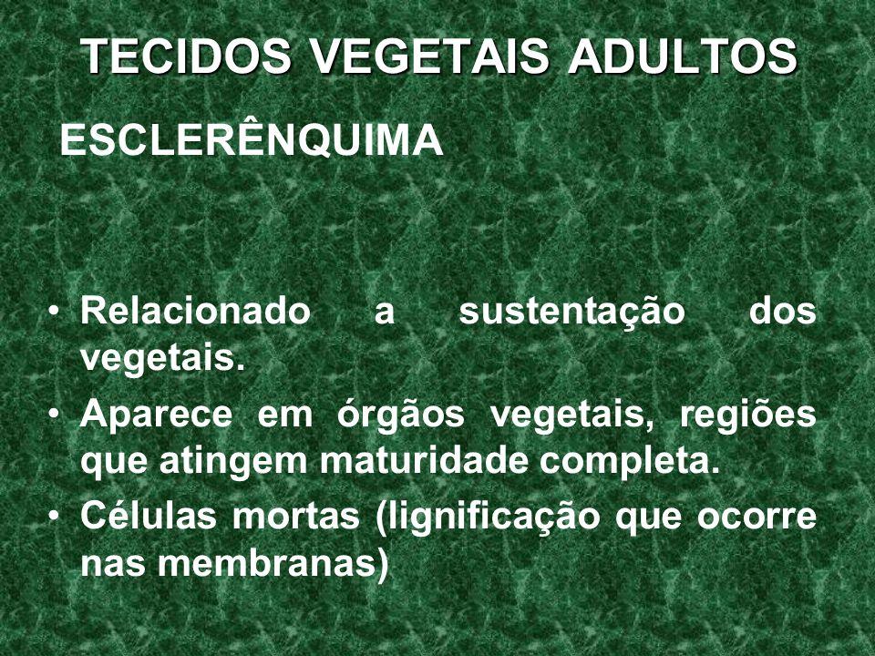 TECIDOS VEGETAIS ADULTOS ESCLERÊNQUIMA Relacionado a sustentação dos vegetais.