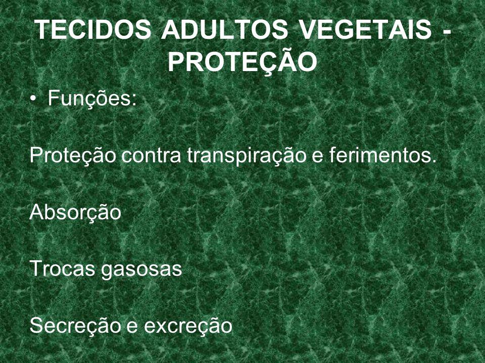 Funções: Proteção contra transpiração e ferimentos. Absorção Trocas gasosas Secreção e excreção