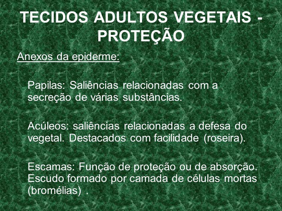 TECIDOS ADULTOS VEGETAIS - PROTEÇÃO Anexos da epiderme: Papilas: Saliências relacionadas com a secreção de várias substâncias.