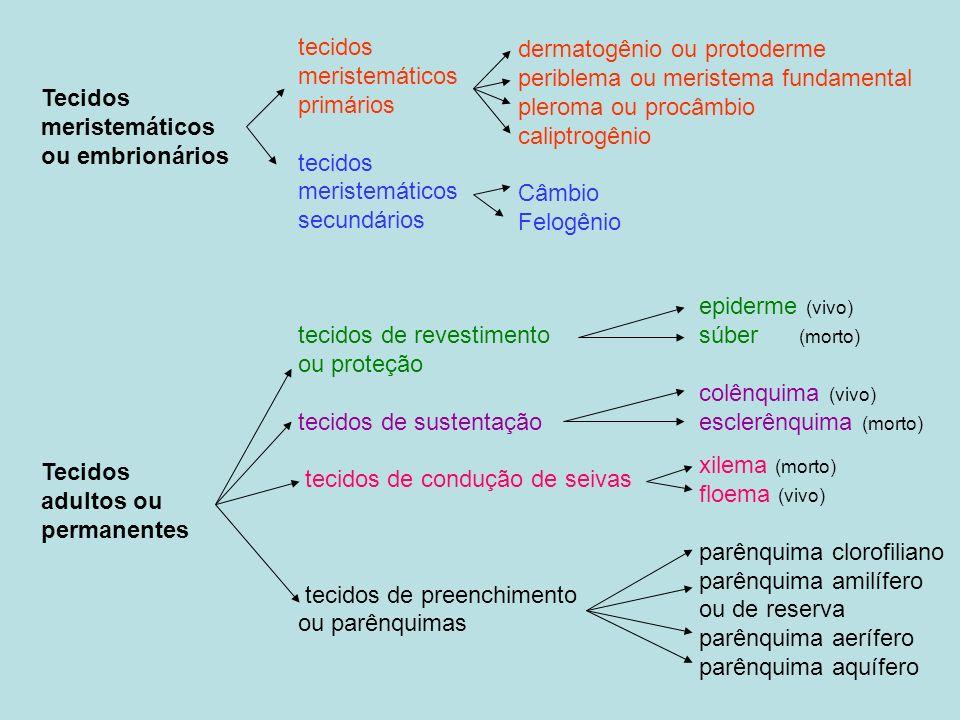 Tecidos meristemáticos ou embrionários Tecidos adultos ou permanentes tecidos meristemáticos primários tecidos meristemáticos secundários tecidos de revestimento ou proteção tecidos de sustentação tecidos de condução de seivas tecidos de preenchimento ou parênquimas dermatogênio ou protoderme periblema ou meristema fundamental pleroma ou procâmbio caliptrogênio Câmbio Felogênio epiderme (vivo) súber (morto) colênquima (vivo) esclerênquima (morto) xilema (morto) floema (vivo) parênquima clorofiliano parênquima amilífero ou de reserva parênquima aerífero parênquima aquífero