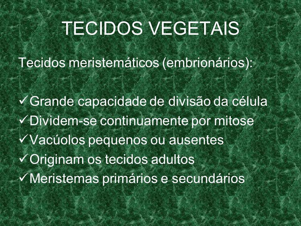 TECIDOS VEGETAIS Tecidos meristemáticos (embrionários): Grande capacidade de divisão da célula Dividem-se continuamente por mitose Vacúolos pequenos ou ausentes Originam os tecidos adultos Meristemas primários e secundários