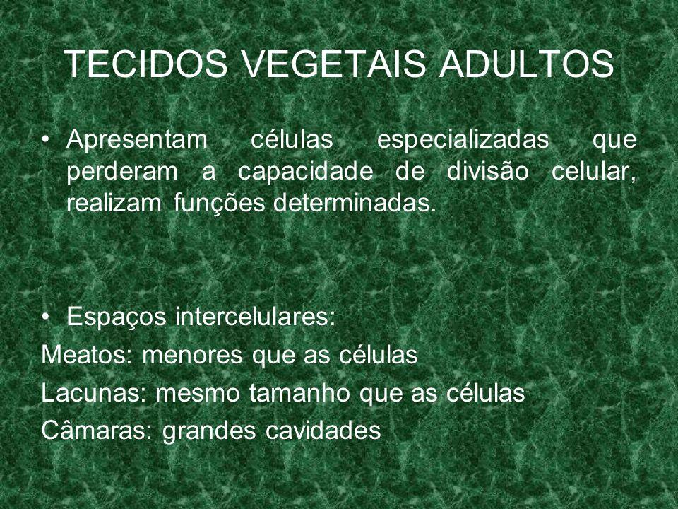 TECIDOS VEGETAIS ADULTOS Apresentam células especializadas que perderam a capacidade de divisão celular, realizam funções determinadas.