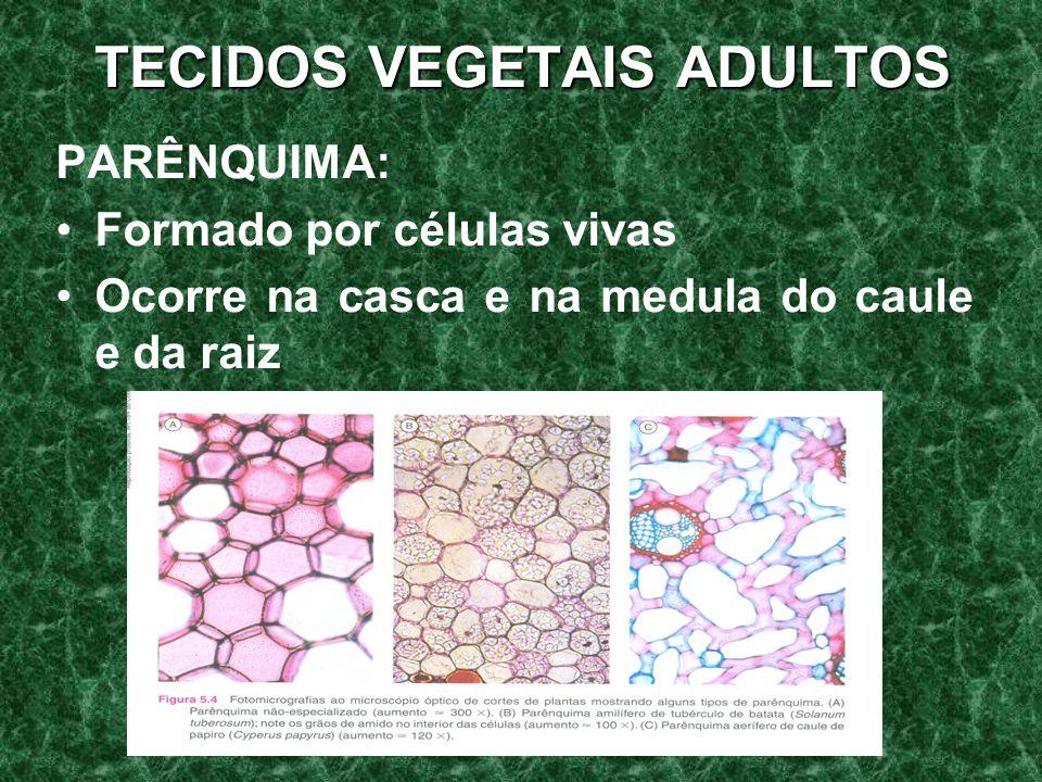 TECIDOS VEGETAIS ADULTOS PARÊNQUIMA: Formado por células vivas Ocorre na casca e na medula do caule e da raiz